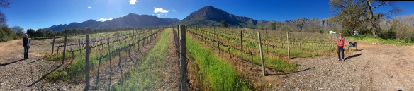 panaroma wine country